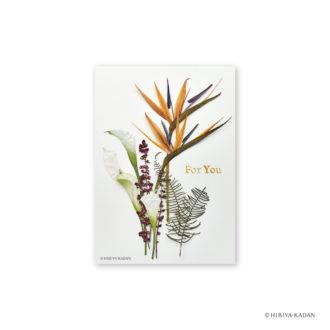 日比谷花壇 ポストカード ストレチア N7716