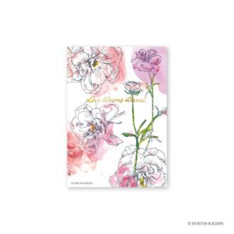 日比谷花壇 ポストカード ラナンキュラス1 N7724